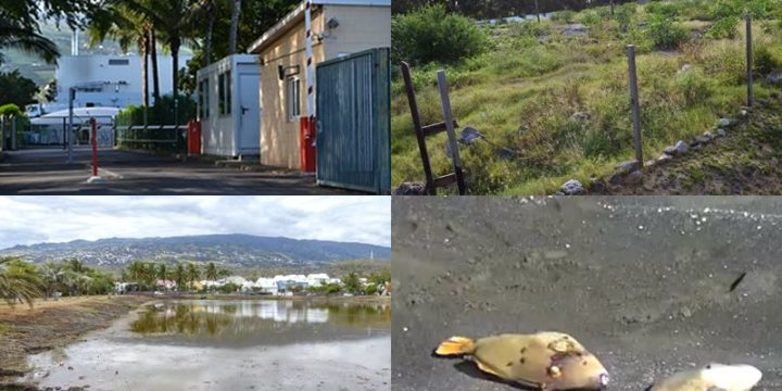 4 questions concernant l'environnement à l'Étang-Salé