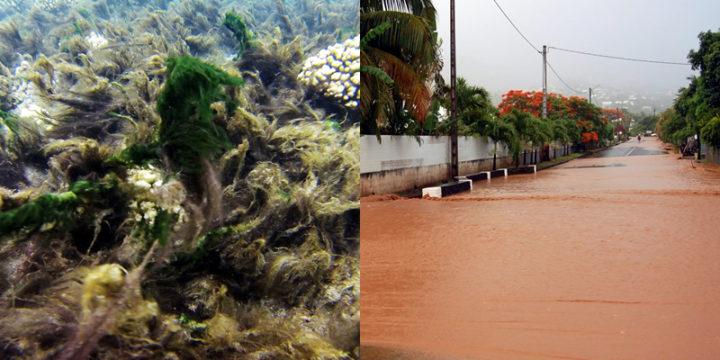 Bloom de cyanobactéries, coulées de boue… Les effets du réchauffement climatique se font sentir à l'Étang-Salé